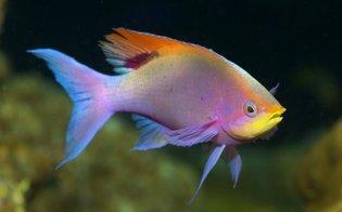 beautiful-wallpapers-water-fish-desktop-wallpaper-animals-under-cool-superb-super-screen